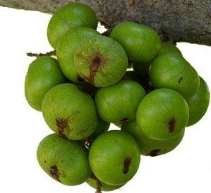 Trị táo bón không cần dùng thuốc