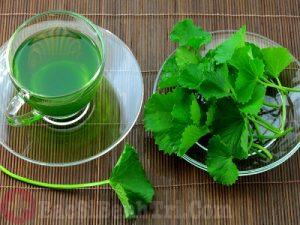 Cách dùng rau má chữa bệnh trĩ nhanh và hiệu quả