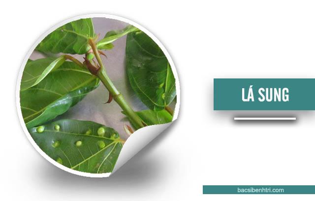 lá sung và ngải cứu chữa bệnh trĩ